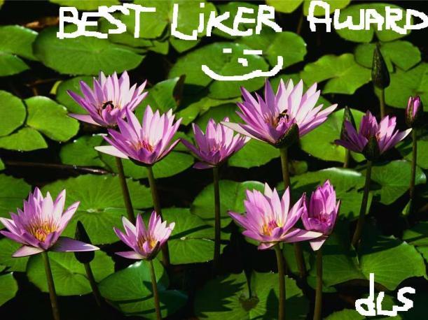 The Best Liker Award