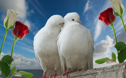 Love-Birds-Peace-and-Free-500x312